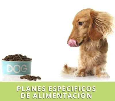 planes de alimentacion para perros en Hellin