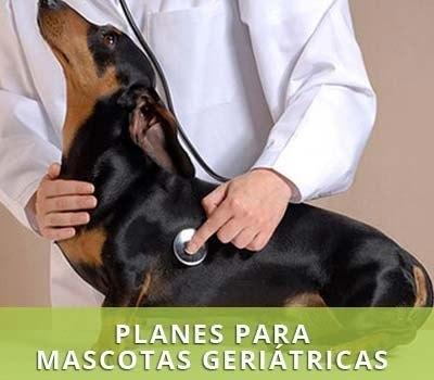 Cuidados geriátricos para mascotas en Hellín