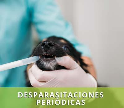 Medicina preventiva y desparasitaciones periodicas en Veterinarios en Hellín