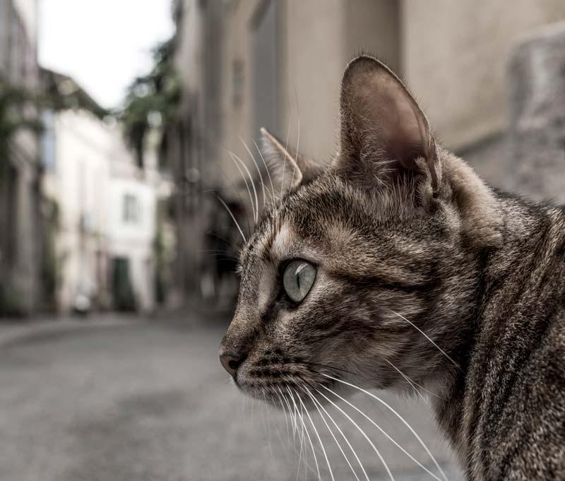 Es importante el microchip y la documentación de tu mascota en Albacete