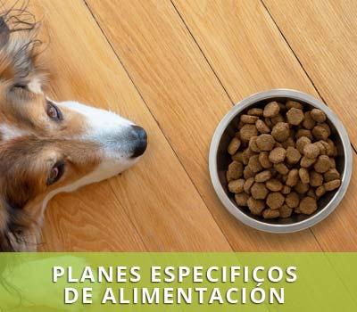 Alimentación adeduada para perros y gatos