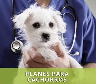 Planes de salud para cachorros en veterinarios Víctor Serena