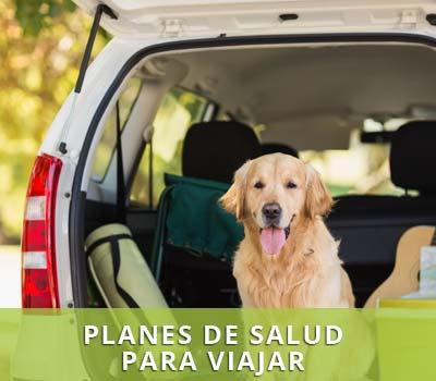 Documentación y vacunas para mascotas en vacaciones
