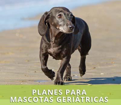 Planes de salud para mascotas geriátricas en Hellín