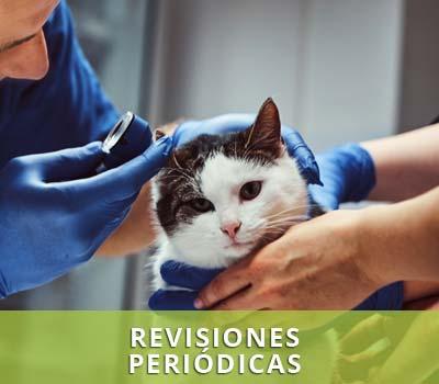 Medicina preventiva y revisiones preriódicas para mascotas en veterinarios en Hellín