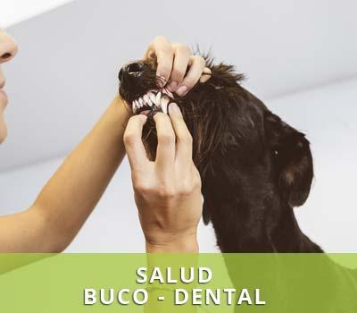 Salud bucodental para perros y gatos, limpiezas dentales Veterinarios Víctor Serena