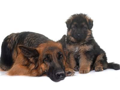 Tratamientos adaptados a la edad de tu mascota