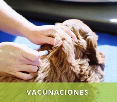 Planes de vacunación para perros, gatos, cachorros