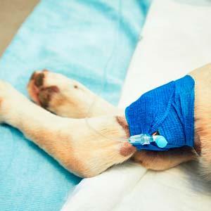 Tratamientos veterinarios a domicilio en Centro veterinario Víctor Serena